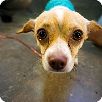 Adopt A Pet :: Jules - Princeton, MN