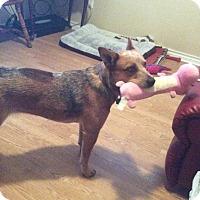 Adopt A Pet :: Lucy - Buchanan Dam, TX