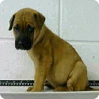 Adopt A Pet :: Khloe - Fort Collins, CO