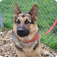 Adopt A Pet :: 24215 - Flash - Ellicott City, MD