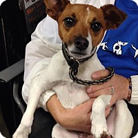 Adopt A Pet :: Ivy - Olive Branch, MS