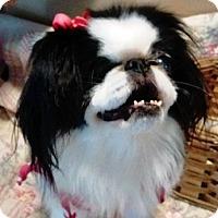 Adopt A Pet :: Amberly - Madisonville, TN