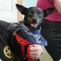 Adopt A Pet :: Sam - Somers, CT