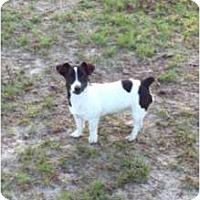 Adopt A Pet :: Rio in Houston - Houston, TX