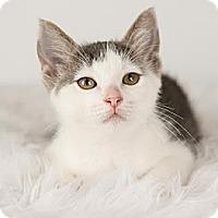 Adopt A Pet :: Peyton - Eagan, MN