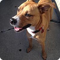 Adopt A Pet :: Riley - Pompton Lakes, NJ
