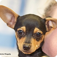 Adopt A Pet :: Finnick - Marietta, GA