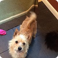 Adopt A Pet :: Lucy - Arden, NC