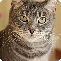 Adopt A Pet :: Meeka - At Adoption Center - Frankfort, IL