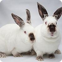 Adopt A Pet :: Hoppen - Los Angeles, CA