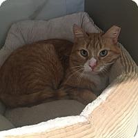 Adopt A Pet :: Jimmy - Staten Island, NY
