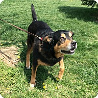 Adopt A Pet :: Hoss - Mechanicsburg, OH