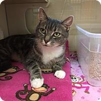 Adopt A Pet :: 1705-1201 Bradley - Virginia Beach, VA
