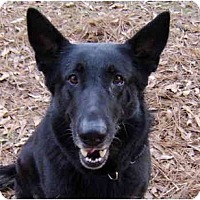 Adopt A Pet :: Carolina - Pike Road, AL