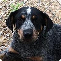 Adopt A Pet :: Carly - Brattleboro, VT