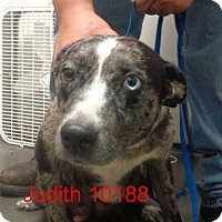 Adopt A Pet :: Judith - Greencastle, NC
