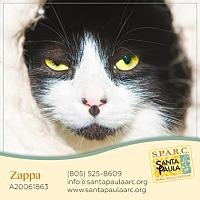 Adopt A Pet :: Zappa - Santa Paula, CA