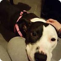 Adopt A Pet :: Roxxy - Broken Arrow, OK