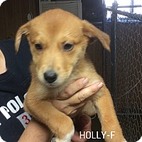 Adopt A Pet :: Holly (has been adopted) - Trenton, NJ