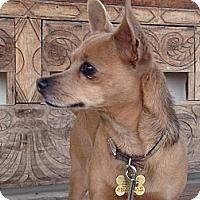 Adopt A Pet :: Kleo - Scottsdale, AZ