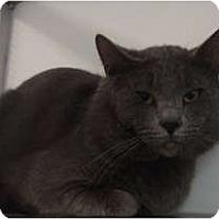 Adopt A Pet :: Hercules - Winter Haven, FL