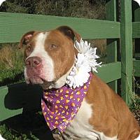 Adopt A Pet :: Ruby - Crescent City, CA