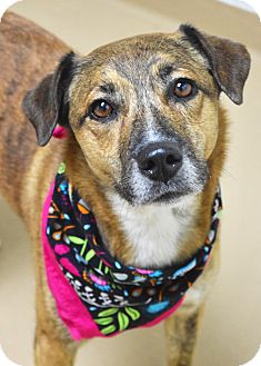 Cattle Dog Mix Dog for adoption in Dublin, California - Chloe