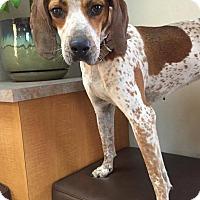Adopt A Pet :: Rhianna - Las Vegas, NV