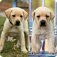 Adopt A Pet :: Greta 💜 DOB 1/14/17! - Branchburg, NJ