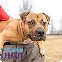 Adopt A Pet :: Tater Tot - Villa Park, IL