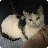 Adopt A Pet :: DIAMOND - Hampton, VA
