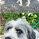 Adopt A Pet :: Shamus