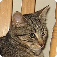 Adopt A Pet :: TATER TOT - 2013 - Hamilton, NJ