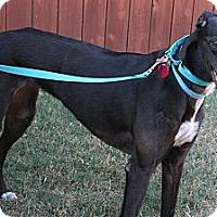 Adopt A Pet :: Carisa Plains