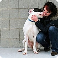 Adopt A Pet :: Molly - Wallaceburg, ON