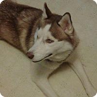 Adopt A Pet :: Jane - Jacksboro, TN