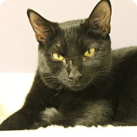 Adopt A Pet :: Cerena - Medina, OH