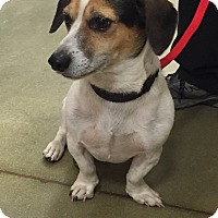 Adopt A Pet :: Loxy - Irmo, SC