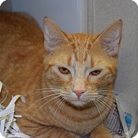 Adopt A Pet :: Penske - Pottsville, PA