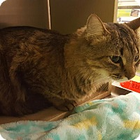 Adopt A Pet :: Regis - Chandler, AZ