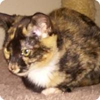 Adopt A Pet :: Atlanta - North Highlands, CA