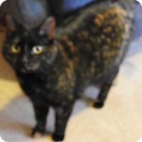 Adopt A Pet :: Turbo - Chaska, MN