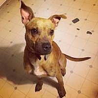 Adopt A Pet :: Leo - Yukon, OK