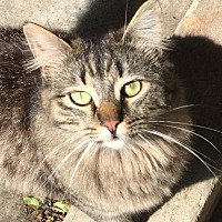 Adopt A Pet :: Moxie & Sweet Pea - Walnut Creek, CA