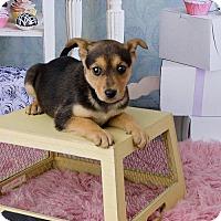Adopt A Pet :: Spork - Denver, CO