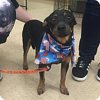 Adopt A Pet :: Finley - Homestead, FL