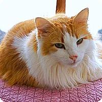 Adopt A Pet :: Buddy Boy - Victor, NY