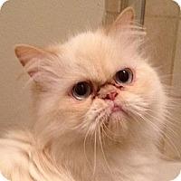 Adopt A Pet :: Wendy - Beverly Hills, CA