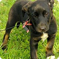 Adopt A Pet :: Baxley - Staunton, VA