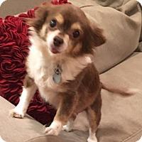Adopt A Pet :: Blanche - Atlanta, GA